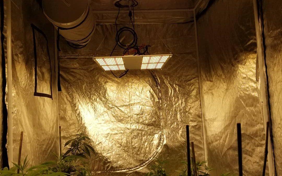 Low budget indoor grow setup